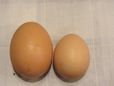 домашни яйца